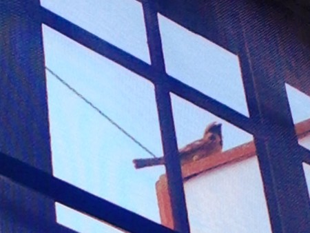 Bird by my bedroom window.